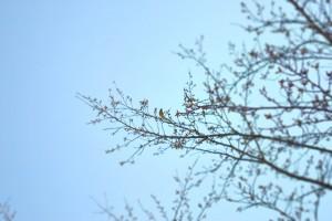 小鳥を追いかけて-2