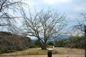 遊歩道20140325 (5)
