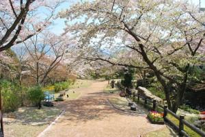 20140410 桜吹雪に包まれる遊歩道 (1)