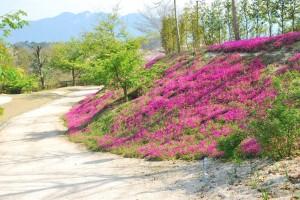 20140410 桜吹雪に包まれる遊歩道 (15)