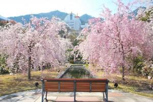 20140410 桜吹雪に包まれる遊歩道 (3)