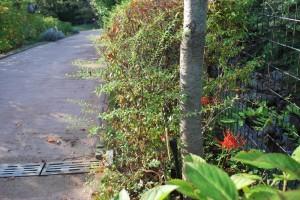 20140921ヒガンバナの花 (2)