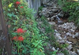 20140921ヒガンバナの花 (3)