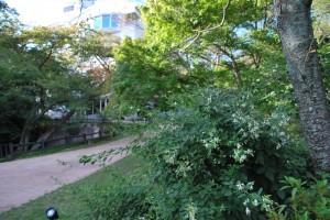 20140925ハギの花(白) (3)