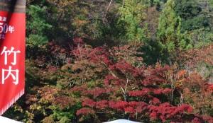20141108紅葉が見ごろを迎えました3 (1)