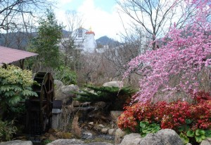20150320梅の花も満開です! (1)