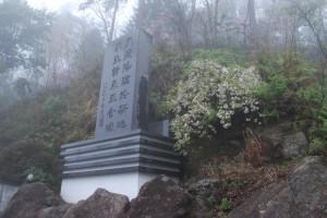 20150407霧の遊歩道 シダレザクラ  (2)
