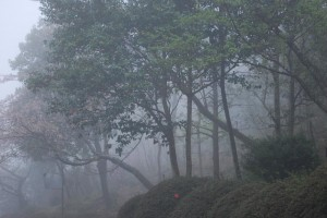 20150407霧の遊歩道