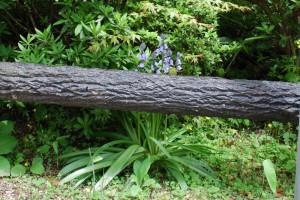 20150423春の草花 ツリガネズイセン (1)