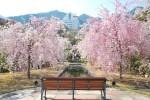 20140410-桜吹雪に包まれる遊歩道-3