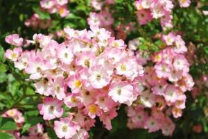 20140530花と鳥、ときどき卵。-1-4