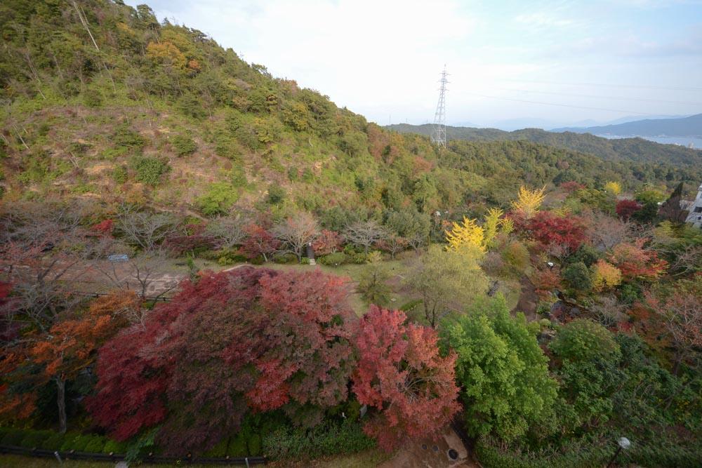 20161117杜の遊歩道の紅葉が見ごろを迎えています (1)