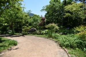 20170520ツルニチニチソウ(蔓日々草)の花 (3)