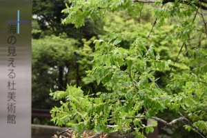 20170626被ばくしたナツメ(棗、学名:Ziziphus jujuba)の木の花 (1)