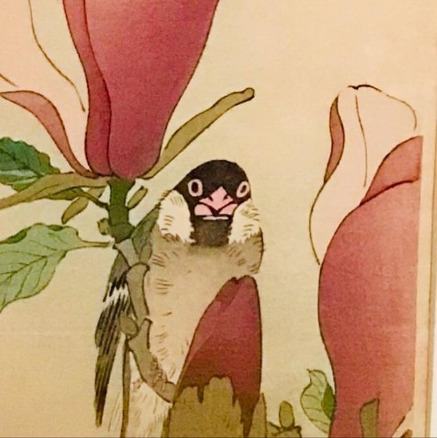 木蓮に文鳥1