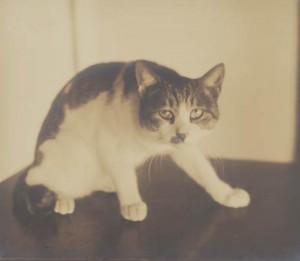 斑猫モデル猫 (1)