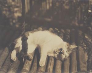 斑猫モデル猫 (2)
