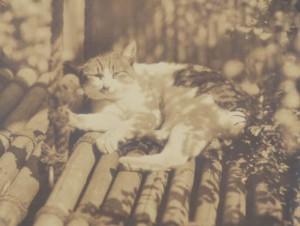 斑猫モデル猫 (3)