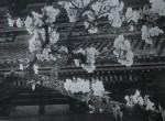 東洋花鳥写真集 (11)