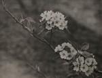 東洋花鳥写真集 (13)