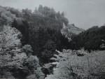 東洋花鳥写真集 (6)