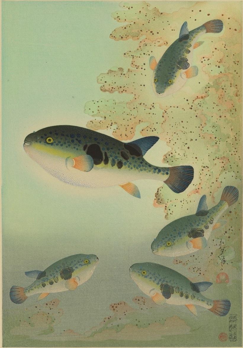 大野麥風『大日本魚類画集』「フグ」
